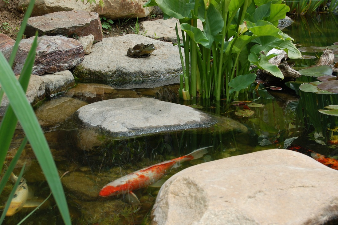 backyard ecosystem pond projects fl melbourne vero beach viera